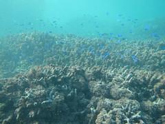 東邊-許多死亡已久的珊瑚骨骼