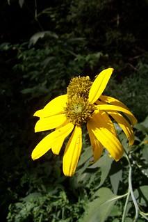 Native plant 1