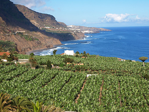 Tenerife's North West Coast