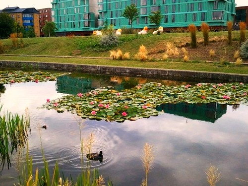Lily pond at Terraced Gardens by Regents Canal near Mile End