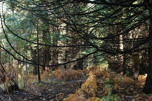 Yosemite underbrush camouflage, a person dressed in gold and gray walks through the gold and gray environment, ferns, trees, Yosemite National Park, California, USA by Wonderlane