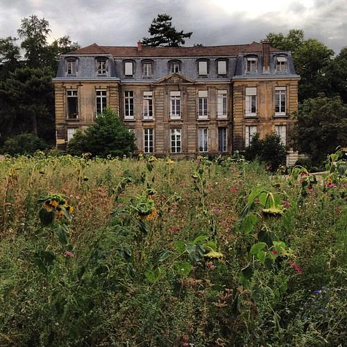 Un petit haunted house avec sunflowers. Jardin des Plantes, #Paris #lovingthemoment