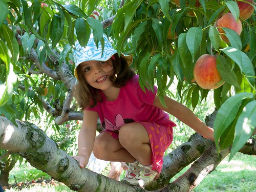 In a peach tree