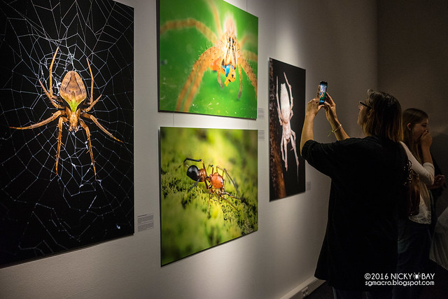Spider Photo Exhibition - DSC05391