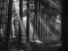 The Lighted Wood