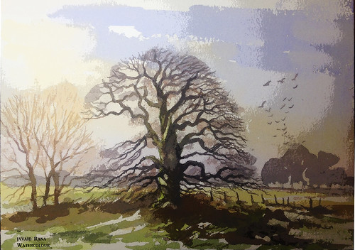 woodland englandnorfolk devon evening morning sunrise oil painting england watercolor acrylic trees alwyn crawshaw june sketch paint drawing country countryside hegderows watercolour geoff kersey peter woolley terry harrison