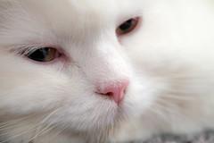 Katze müsste man sein ... 255/366