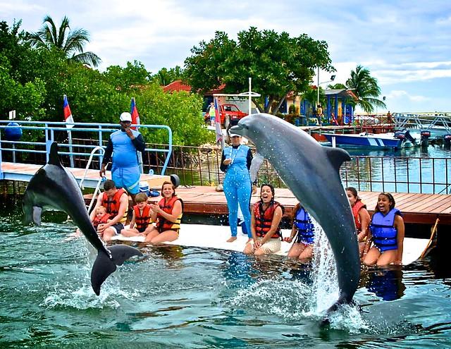 anteketborka.blogspot.com, dauphins3