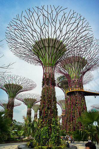 The Giant Super Trees, undoubtedly one of the most recognizable hallmarks of Gardens by the Bay.