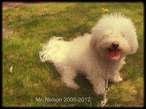 Mr. Nelson 2005-2012 by Emilyannamarie