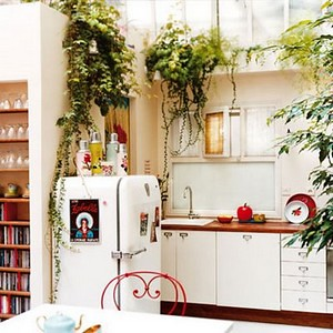 best-hanging-plants