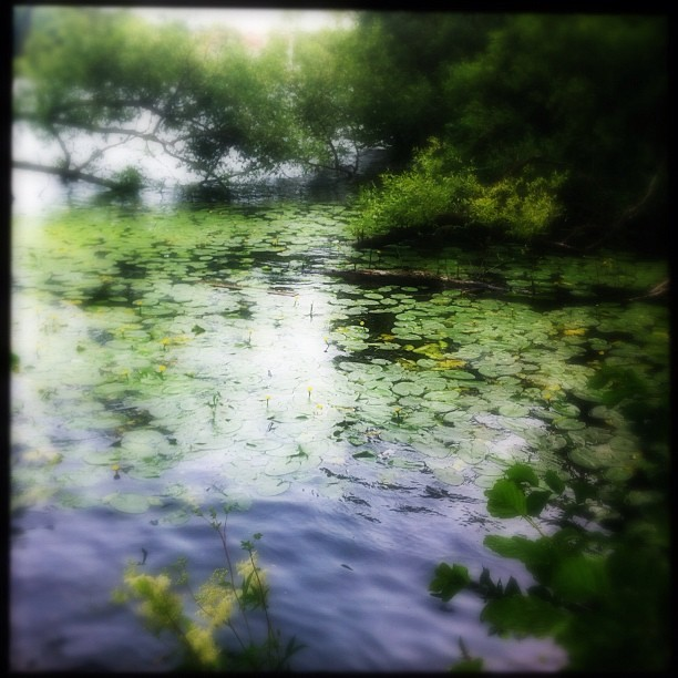 Enchanted Light Series. #enchanted #light #iphoneonly #nature #instagood #instamood #photooftheday #beautiful #landscape #summer #water #flowers