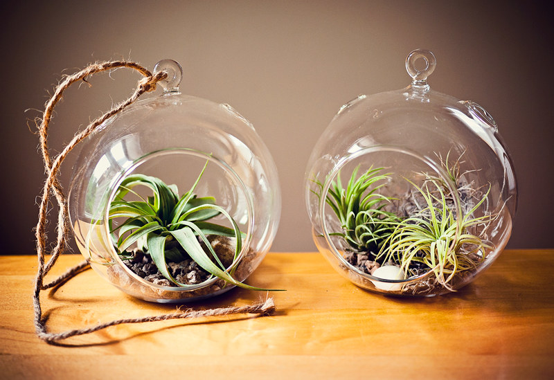 diy air plant terrarium ciera design studio. Black Bedroom Furniture Sets. Home Design Ideas