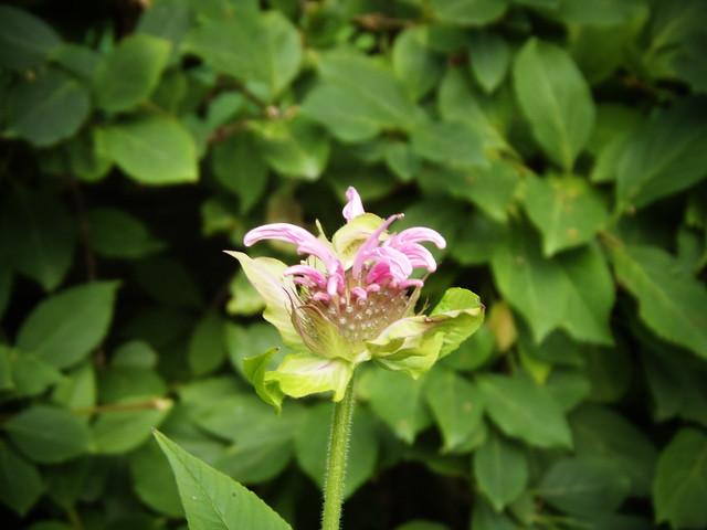 Weird Looking Flower Flickr Photo Sharing