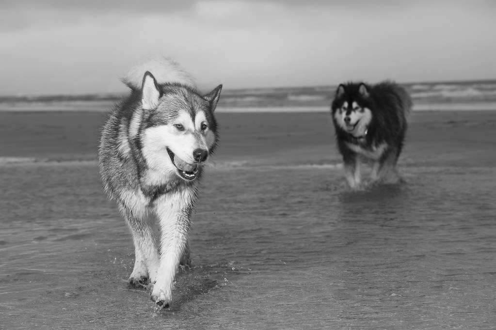 Boys on the beach by Nolano55