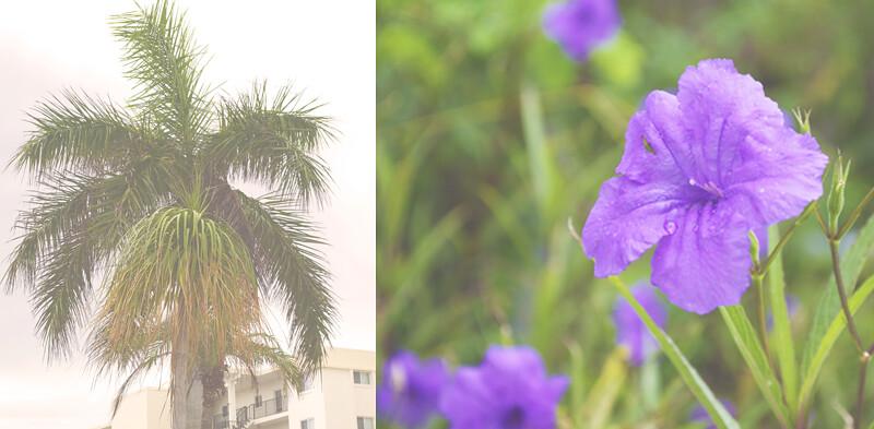 Siesta Key - Afternoon & Evening