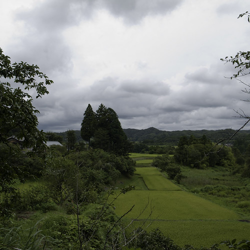 Rice Paddy with Cloud Hole, Yorokeikoku, Chiba, Japan