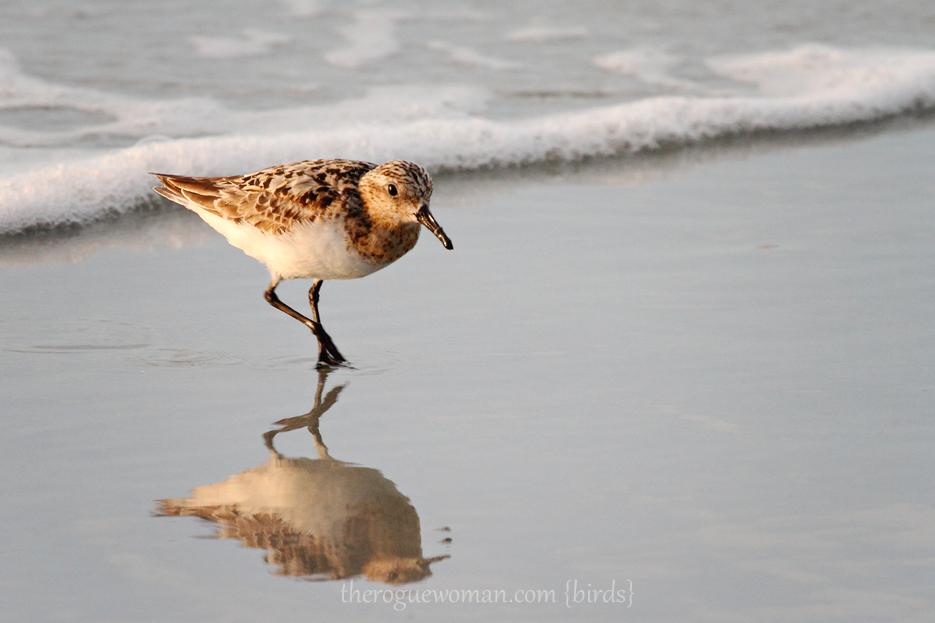 072412_02_bird_piper01