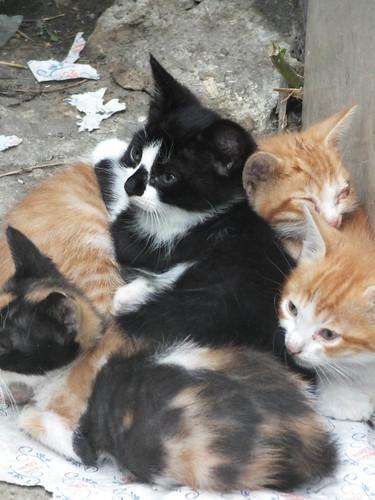 Új cicák