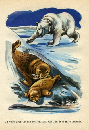 FRAM, l'ours polaire, by Cezar PETRESCU -image-50-150