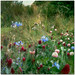 gardens - wild and unruly | 2