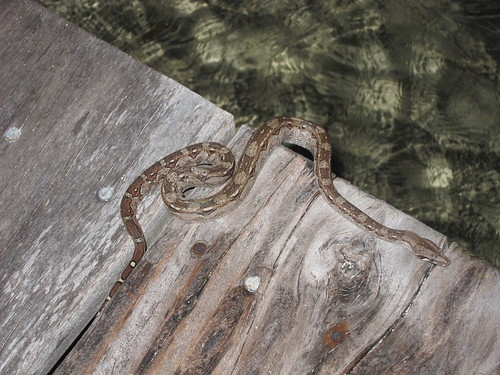 Snake on the dock