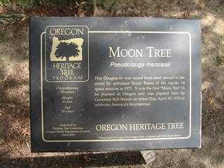 """Willson Park """"Moon Tree"""""""