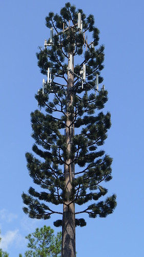 cellphone tower tree