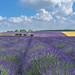 Cotswolds Lavender by jactoll