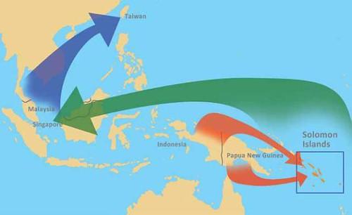 所羅門群島與其他國家鳥類貿易關係圖©Richard Thomas