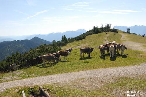 Bayer_Zugspitzbahn_Wank_Yoga_Juli_2012_05