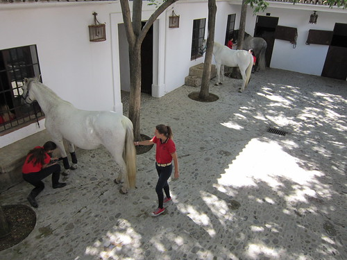 ロンダの闘牛場の馬 by Poran111