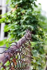 Rusty Fence Bokeh [202/366]