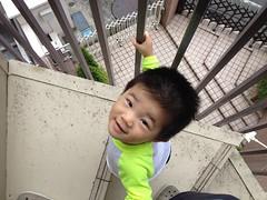 朝散歩 とらちゃん 階段 (2012/7/22)