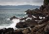 Photo:saikai coast | 西海の海岸 By l e o j