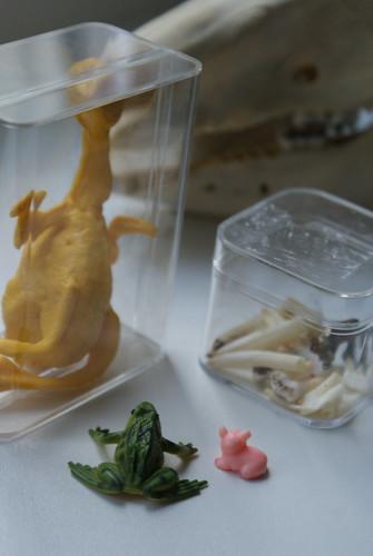 froschkönig und little miss sunswine im naturhistorischen museum