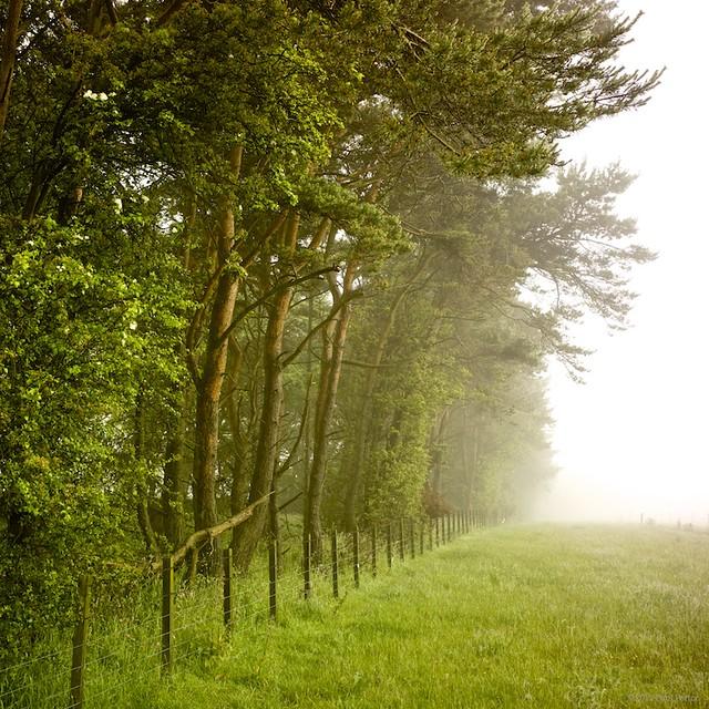 Misty tree line