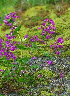 Unidentified Wildflowers