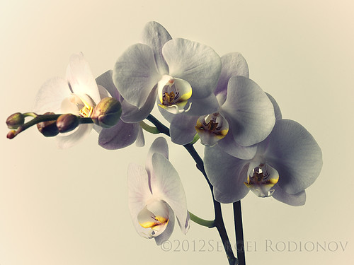 3 views of Orchid - 1