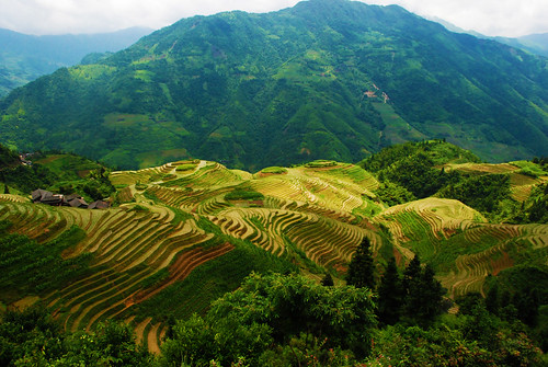 Longsheng Rice Terraces, Yao Village, China