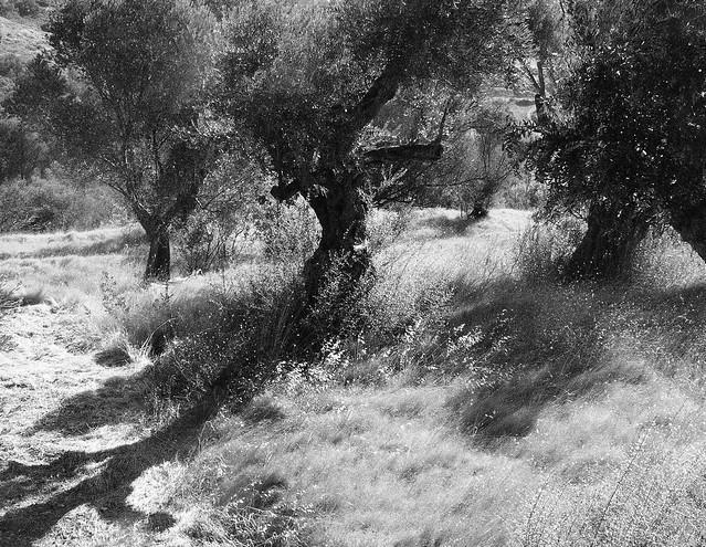 summer grass, long shadow