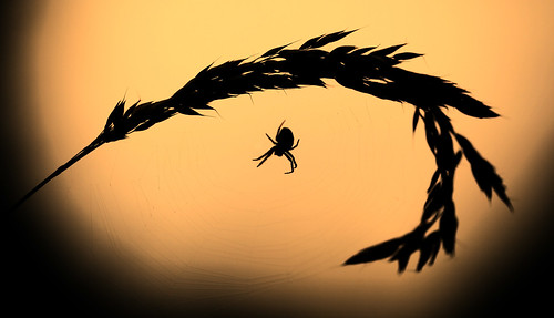 england nature canon evening spider devon fields canon5d ashburton canonef10028 canon5dmarkii mygearandme mygearandmepremium mygearandmebronze mygearandmesilver mygearandmegold mygearandmeplatinum mygearandmediamond ruby10