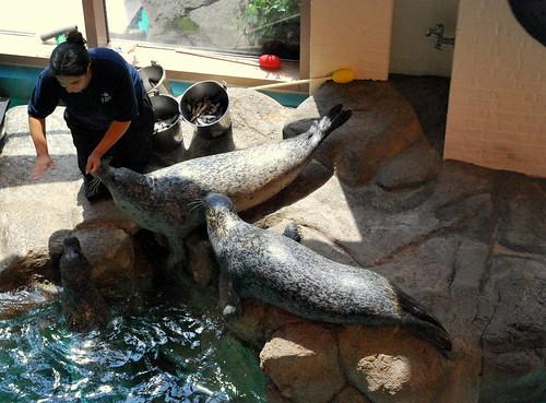 MA - sea lion show