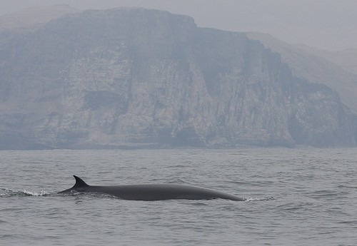 Whale watching in Peru with Nature Expeditions