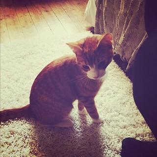 #cute #kitten #meow