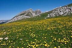 Praterie appenniniche con M.te  Meta sullo sfondo, Parco Nazionale d'Abruzzo, Lazio e Molise, Picinisco, Lazio, Italia.