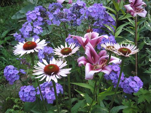 Echinacea Phlox Lilium combo