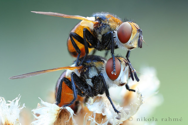 7797264444 bccb9fb5dc z 25 Insanely Detailed Macro Images Of Insects
