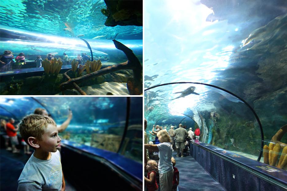 072612_10_aquarium05