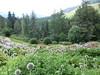 vista sull'orto botanico